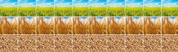 Investment and strategy for agriculture producers and investors - Agriculture Investment Summit Asia